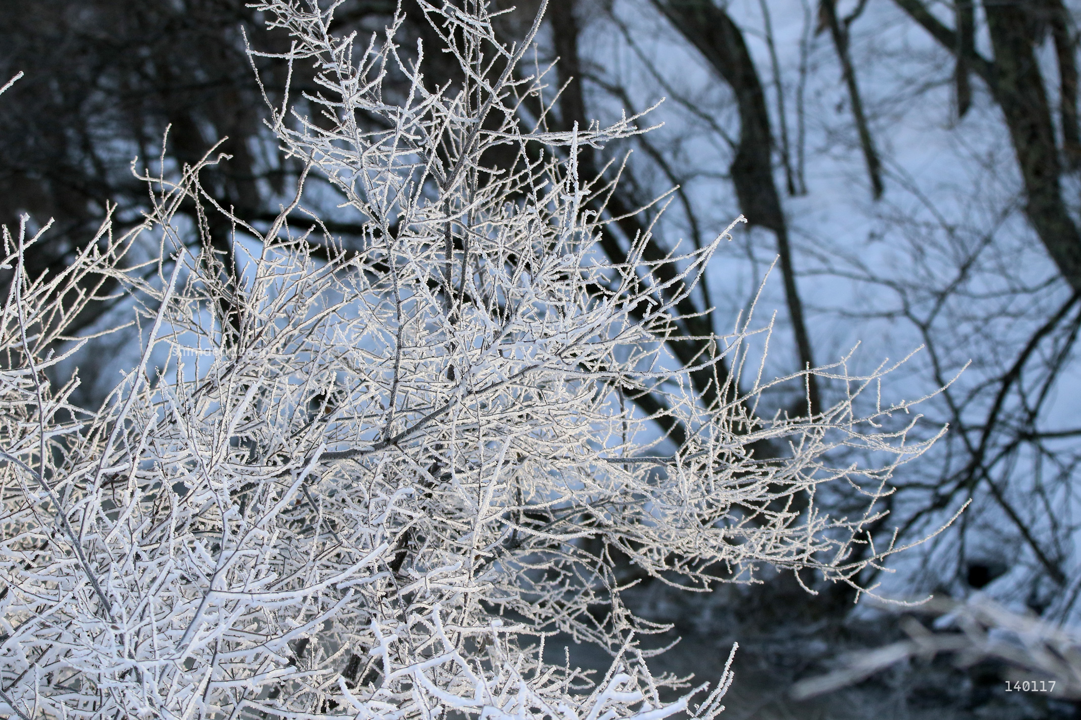 霧氷(むひょう)
